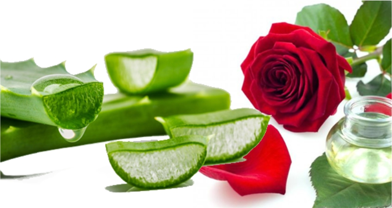 Aloe-Vera-and-Rose-Moisturizer-for-Taking-Care-of-Your-Oily-Skin