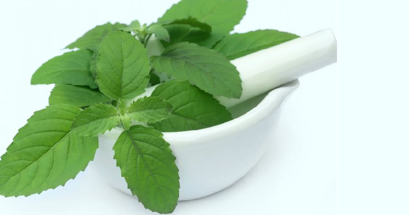 Tulsi-Help-You-Get-a-Younger-Looking-Skin