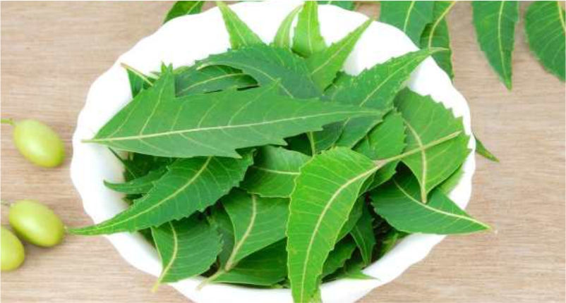 Neem–Natural-Cleansing-Agent-to-Get-Flawless-and-Glowing-Skin